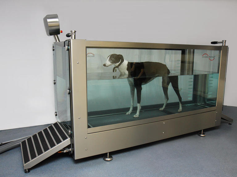 Best Treadmills For Home >> Canine Hydrotherapy and Physiotherapy in water treadmill ...